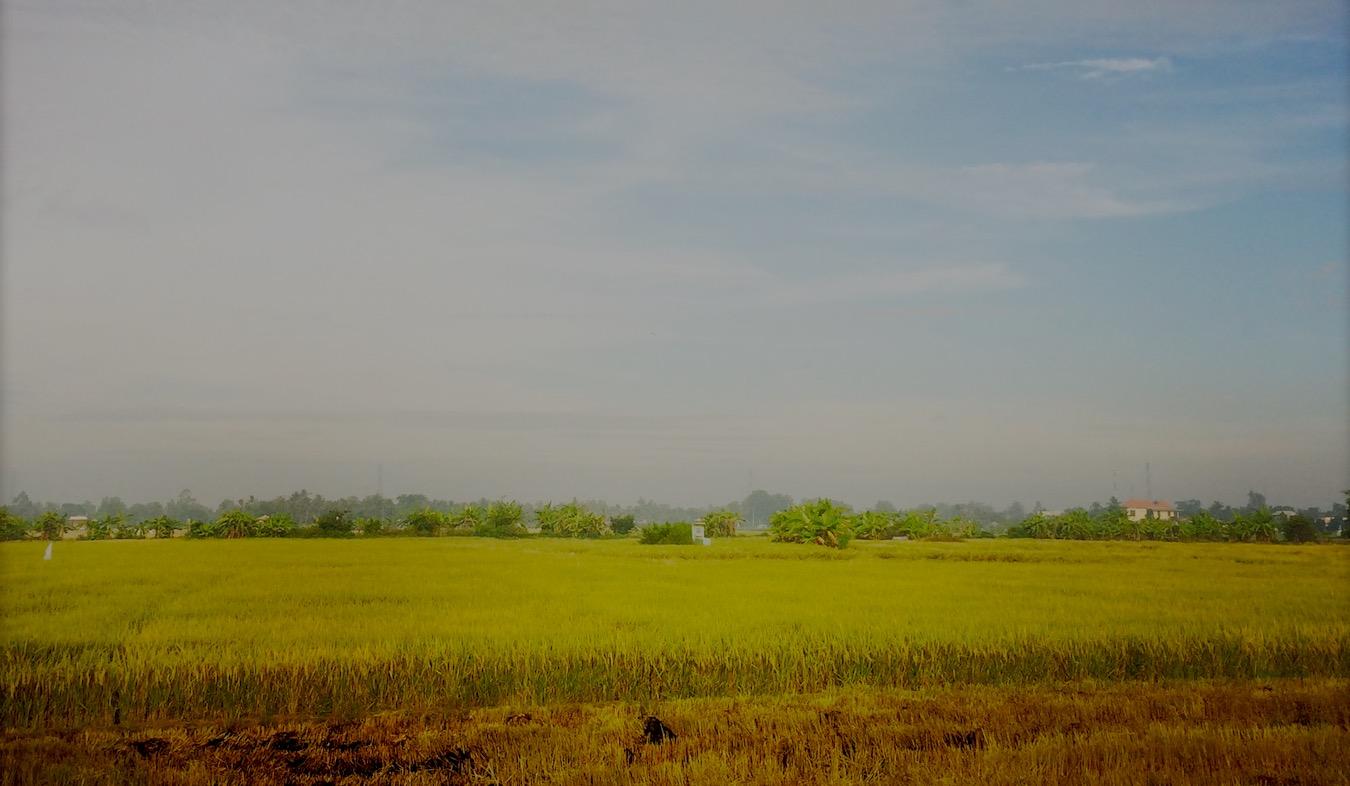 Agriculture Vietnam Rizière Delta du Mékong Photo ©VoTrungDung APN